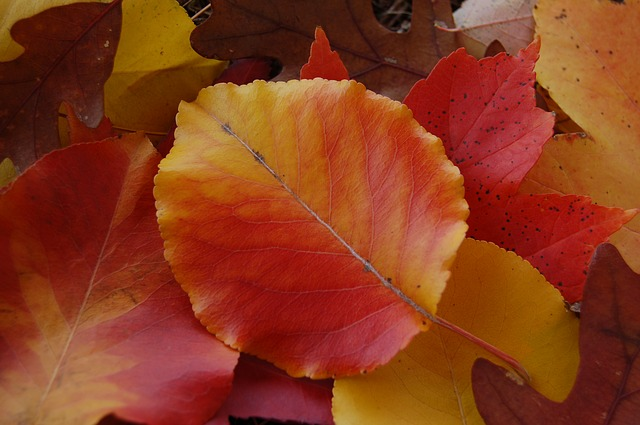 Free leaves autumn fall nature red orange yellow