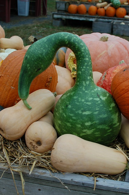 Free gourd squash pumpkins october halloween harvest