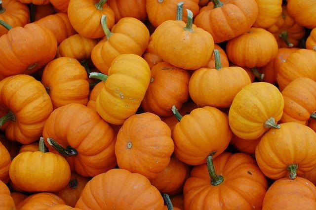 Free pumpkins october harvest vegetables orange