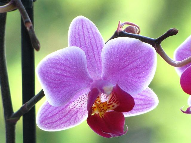 Free orchid close flower violet plant