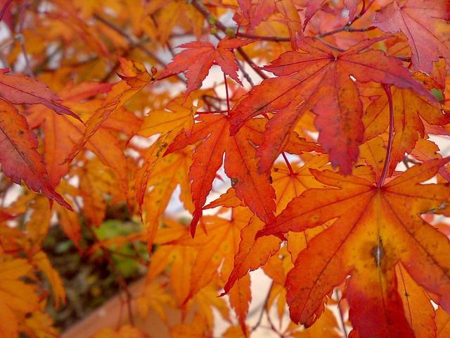 Free autumn leaves fall foliage colorful golden autumn