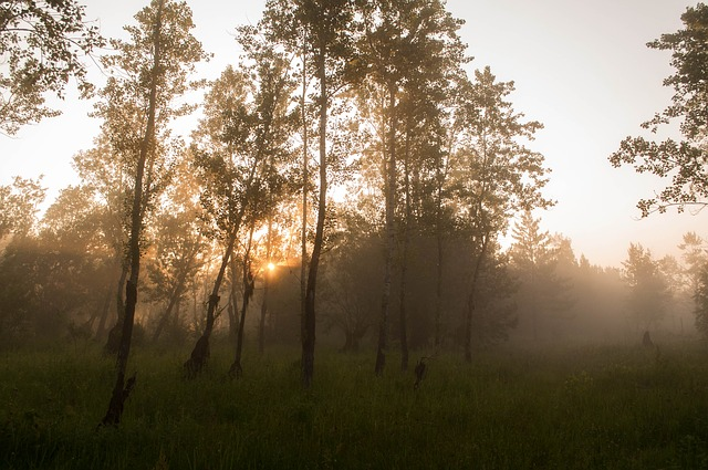 Free forest fog trees humidity dawn morning sun