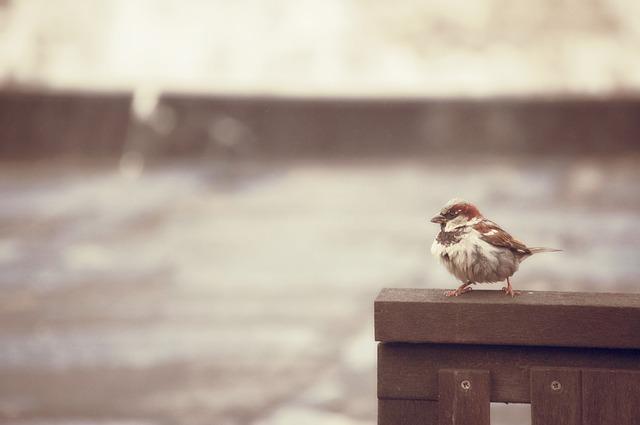 Free sparrow bird rain trueb outdoor nature