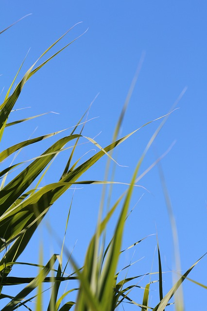 Free grass leaves meadow sky blue nature green