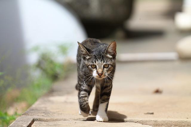 Free cat feline walking walking lonely animal