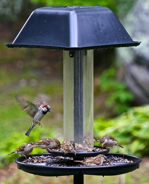 Free hummingbird bird small flutter wild animal