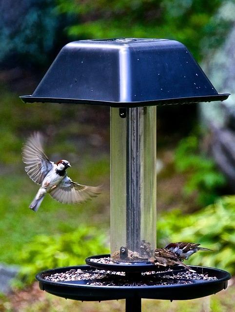 Free hummingbird bird flutter