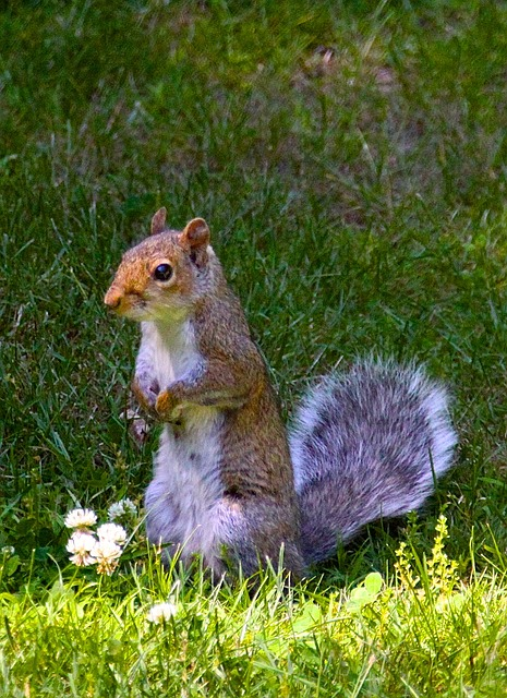 Free squirrel rodent animal nature wild environment