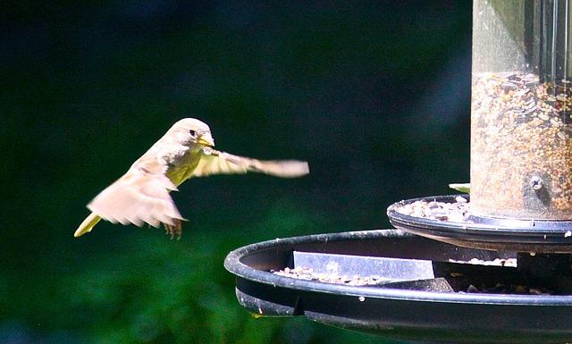 Free hummingbird bird fluttering nature