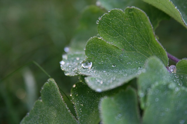 Free Photos: Dewdrop journal plant dew close morgentau | Marcus Sammet