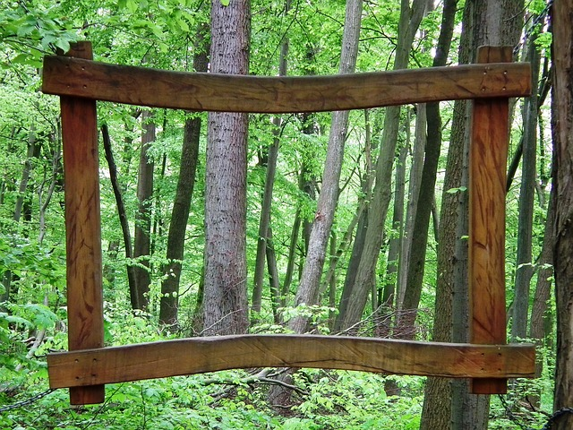 Free frame forest tree nature green log deciduous tree
