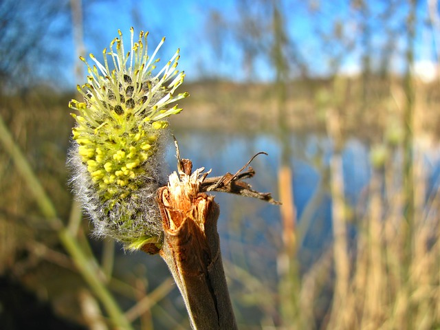 Free pond spring plants vegetation branch blossom