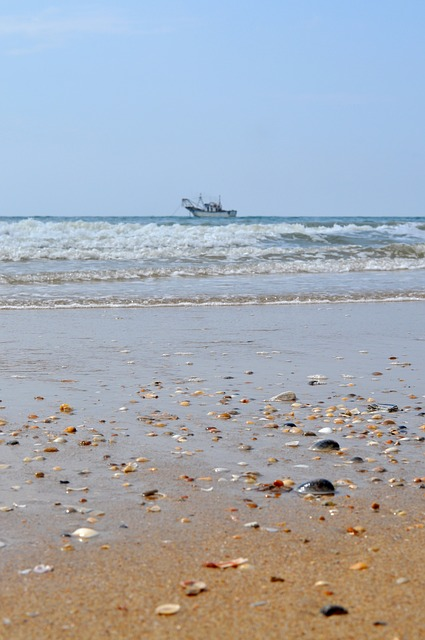 Free fishing boat shells sea the antilla lepe huelva