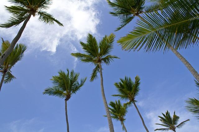 Free palms caribbean beach sky blue landscape nature