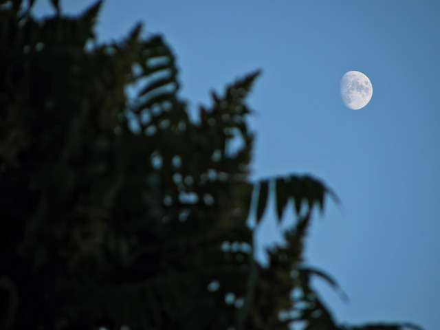 Free moon sky skyscape tree plant vegetation branches
