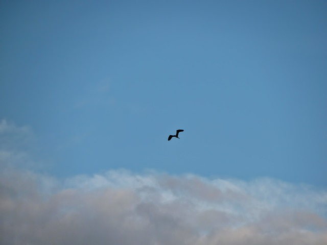 Free bird sky clouds skyscape air flying flight blue