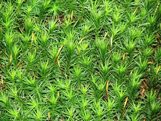 Free moss green forest nature plant ground