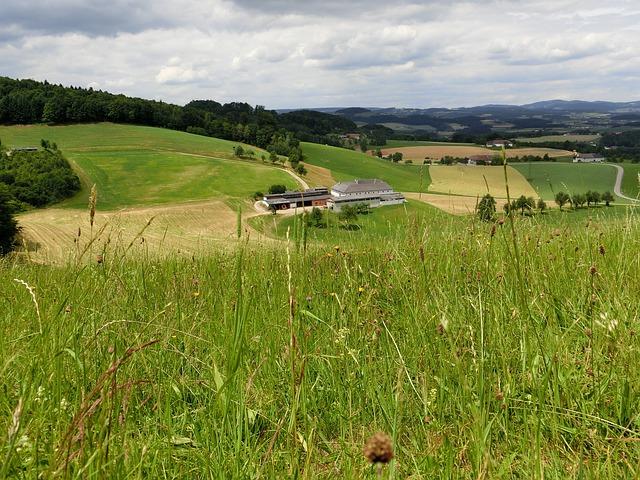 Free austria alm meadow landscape pasture green