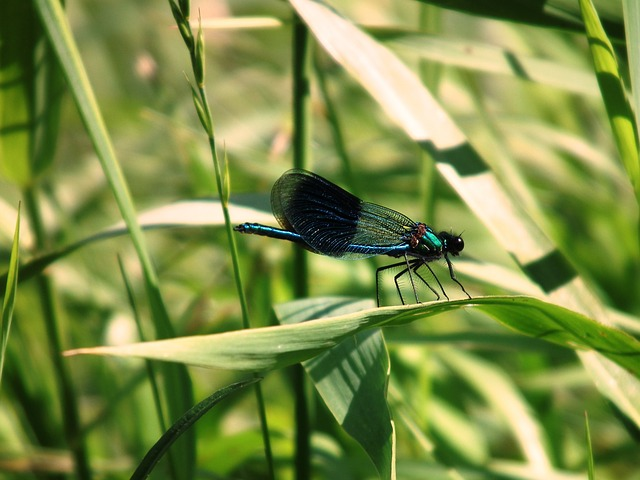 Free dragonfly insect halm grass bank water river