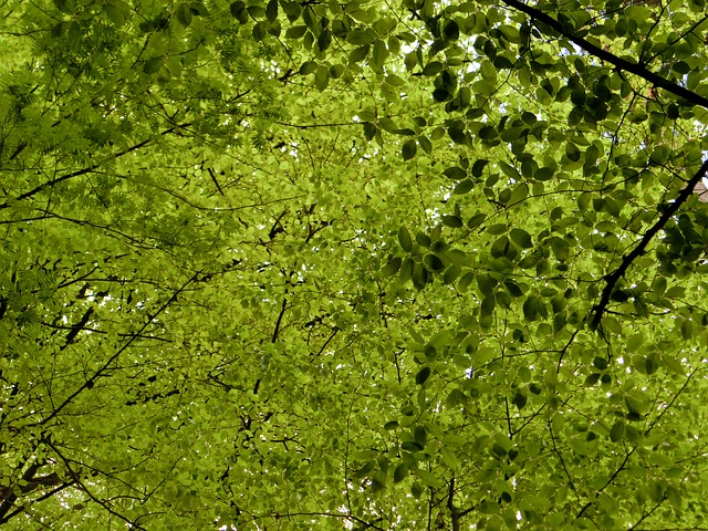 Free canopy deciduous trees leaves nature green