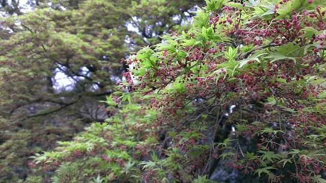 Free shinjuku gyoen spring momiji