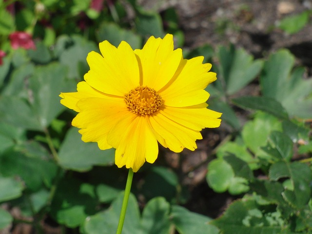 Free flower yellow plant garden meadow nature pollen