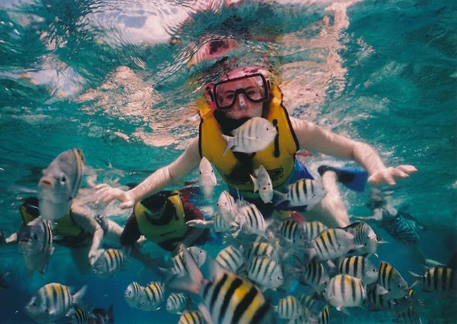 Free reef snorkeling snorkeler reef underwater sea