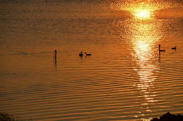 Free waterfowl ducks sea see sunset evening twilight