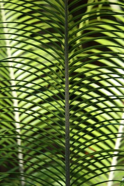 Free leave palm tropical palm flora foliage