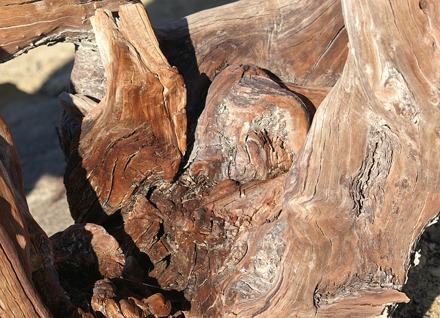 Free root wood old gnarled