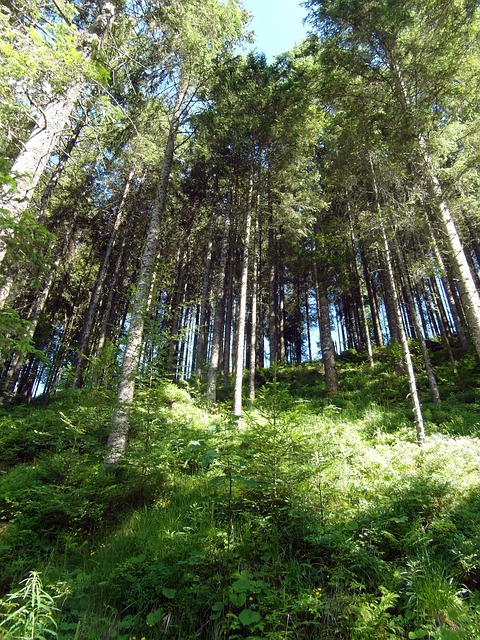 Free black forest slope forest hiking