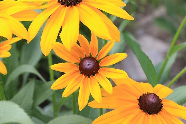 Free yellow flowers summer