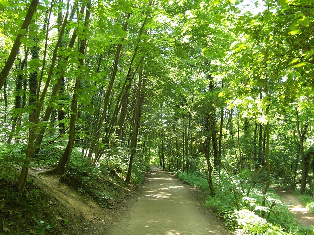 Free odenwald forest path trail summer hiking away