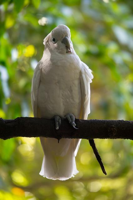 Free tropical bird wild white parrot