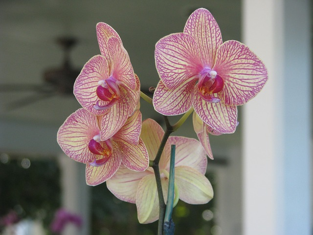 Free orchid flower floral plant beautiful