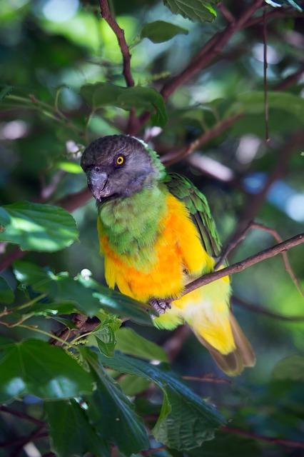 Free tropical bird bird wild exotic parrot