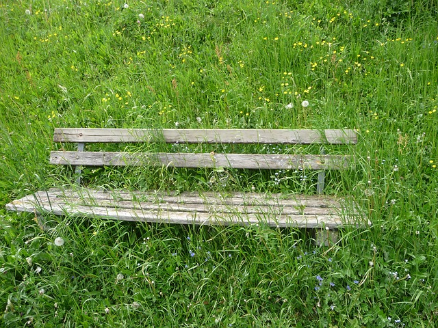 Free bank seat flower meadow alpine overgrown