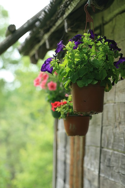 Free flower pot potted plant flowers hanging outdoors
