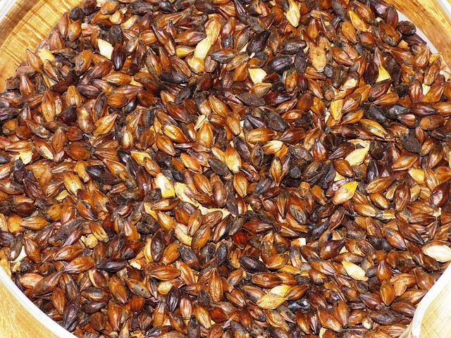 Free the malt wheat malt barley malt grains grain corn