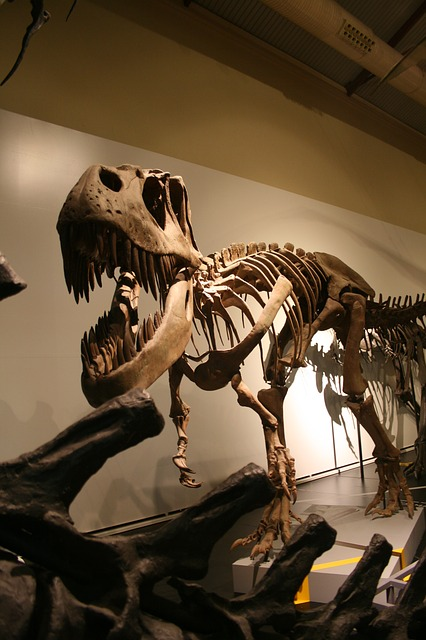 Free tyrannosaurus skeleton prehistoric history animal