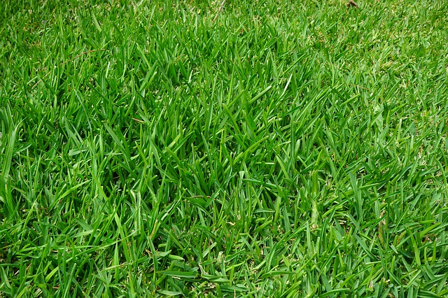 Free grass rush juicy green blades of grass halme
