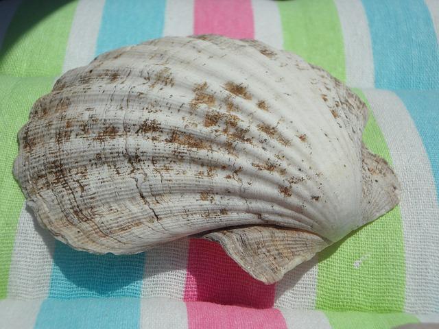 Free shell large close