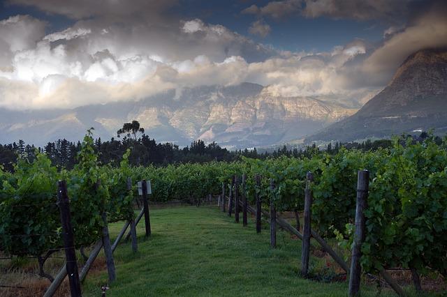 Free landscape mountains vineyard