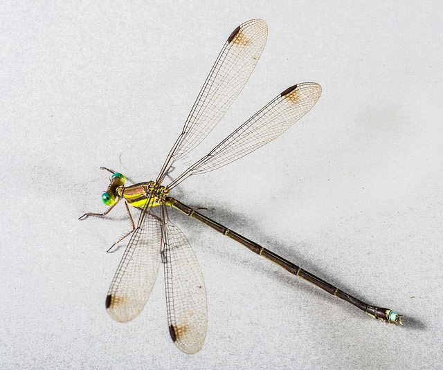 Free dragonfly insect close