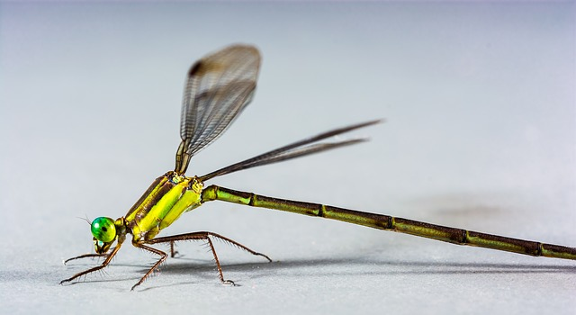 Free dragonfly insect close eye green compound legs