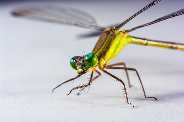 Free dragonfly insect close eye