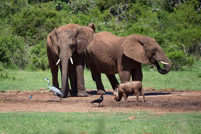 Free elephants africa safari big five mammals wild ife