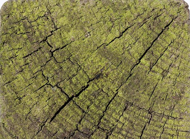 Free wood structure fund seaweed old weathered cracks