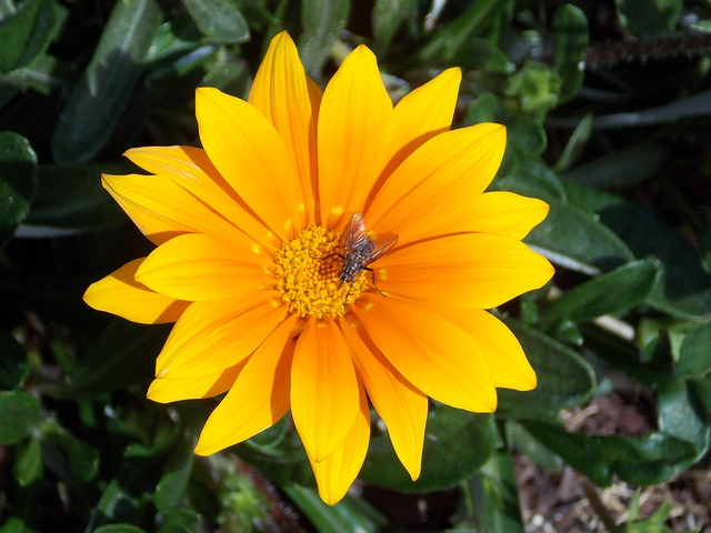 Free flower yellow fly close nature
