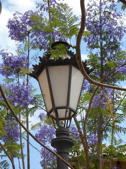 Free lantern jacaranda mediterranean south blossom lamp